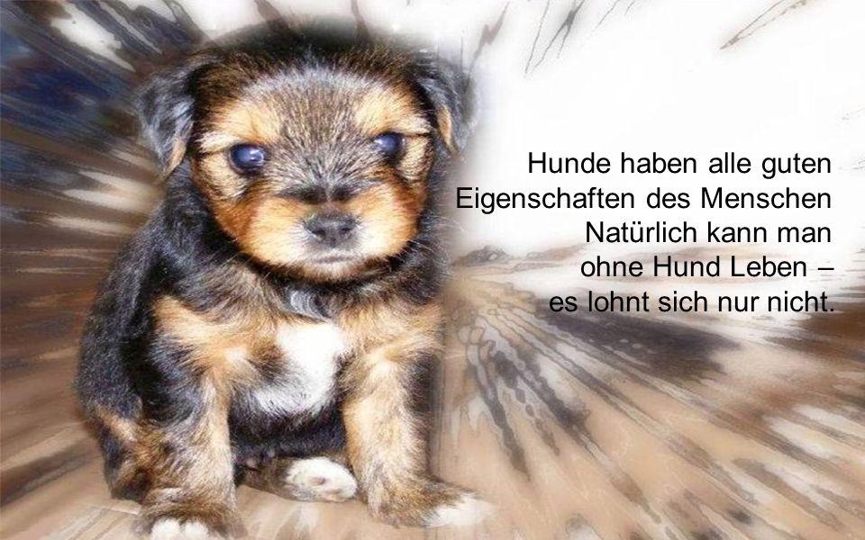 Hunde haben alle guten Eigenschaften des Menschen ohne gleichzeitig ihre Fehler zu besitzen.