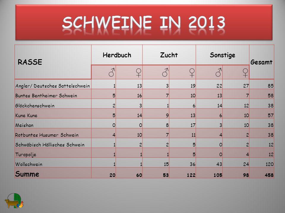 RASSE HerdbuchZuchtSonstige Gesamt Angler/ Deutsches Sattelschwein113319222785 Buntes Bentheimer Schwein51671013758 Glöckchenschwein2316141238 Kune 51