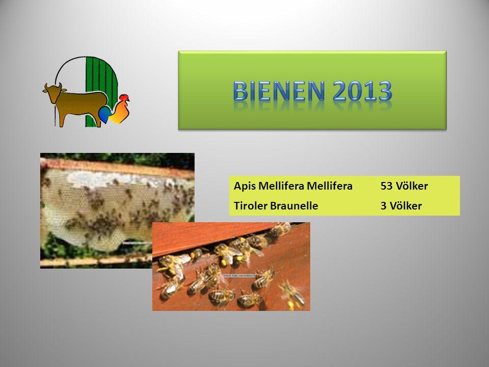 Apis Mellifera Mellifera53 Völker Tiroler Braunelle3 Völker