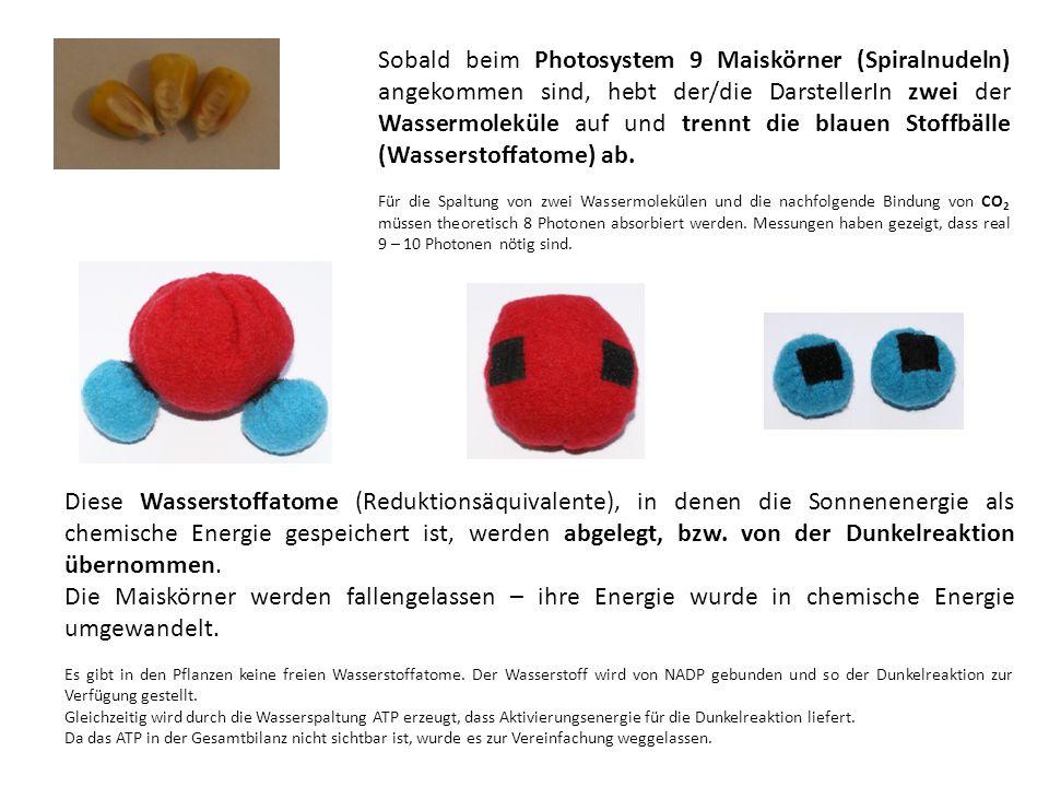 Diese Wasserstoffatome (Reduktionsäquivalente), in denen die Sonnenenergie als chemische Energie gespeichert ist, werden abgelegt, bzw.