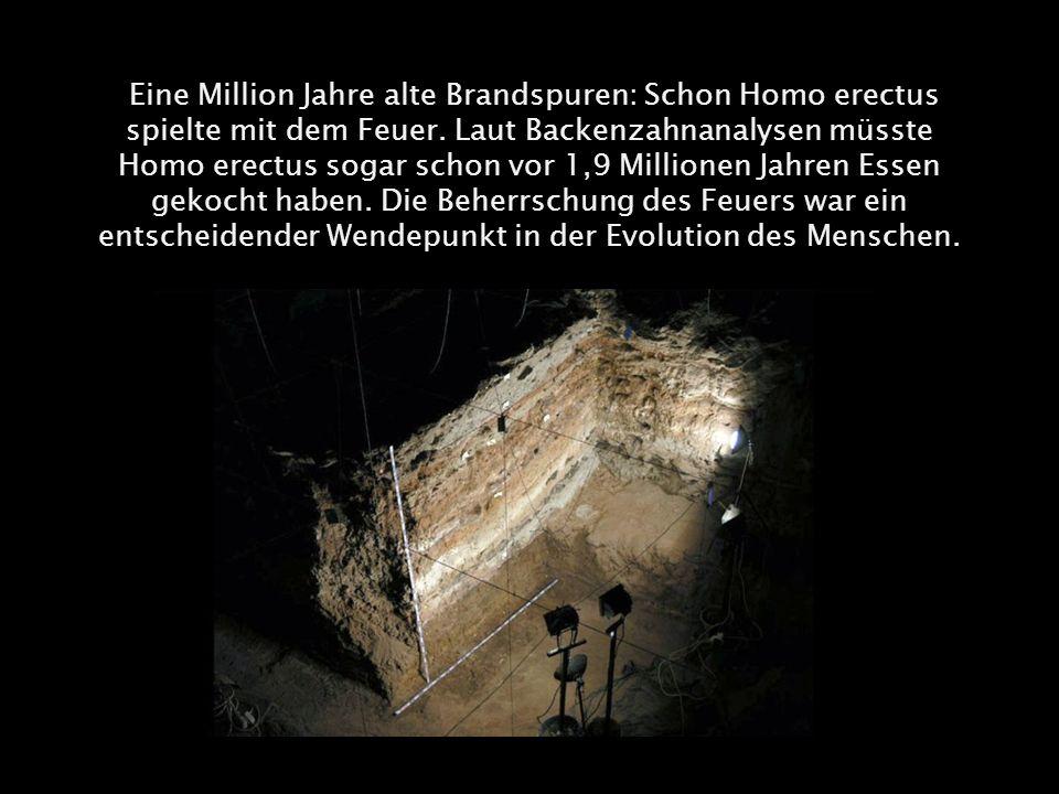 Eine Million Jahre alte Brandspuren: Schon Homo erectus spielte mit dem Feuer. Laut Backenzahnanalysen müsste Homo erectus sogar schon vor 1,9 Million