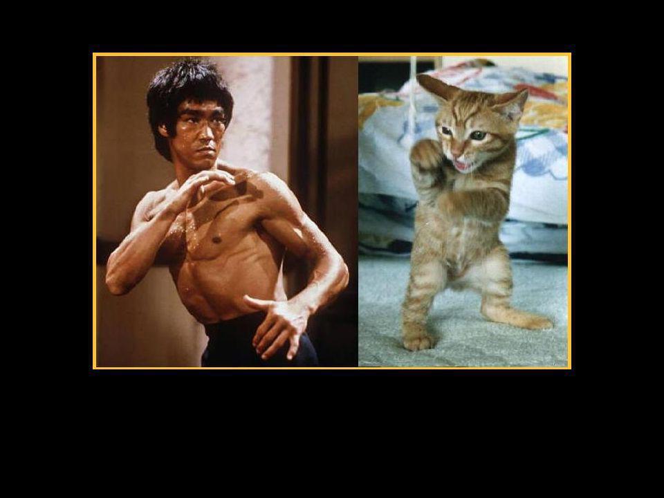 …er hat das schon gelernt als er noch GANZ klein war! So wie ich! Weisst du er war nämlich die lieblings Katze von Bruce Lee!