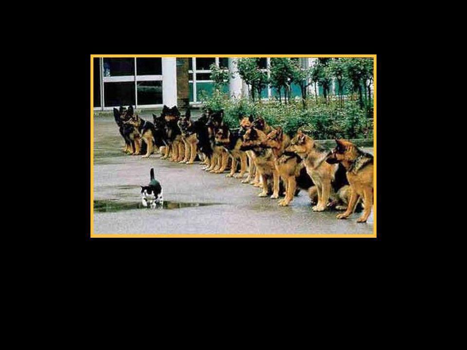 Und mein Onkel hat nämlich vor überhaupt nichts Angst! Schon gar nicht vor Hunden!