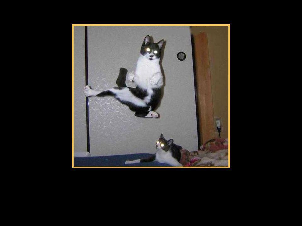 Er kann nämlich sogar Karate…