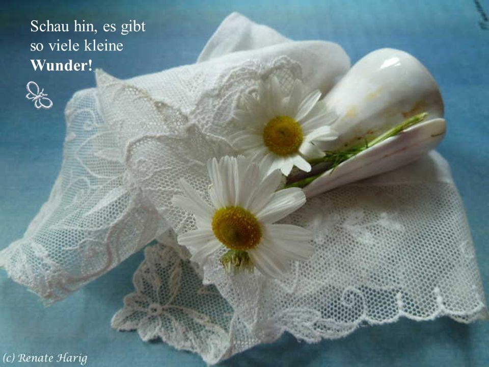 Tag für Tag eine kleine Freude! Das kann das Lächeln eines Kindes sein, eine kleine unscheinbare Blume, die am Wegesrand blüht, der freundliche Gruß d