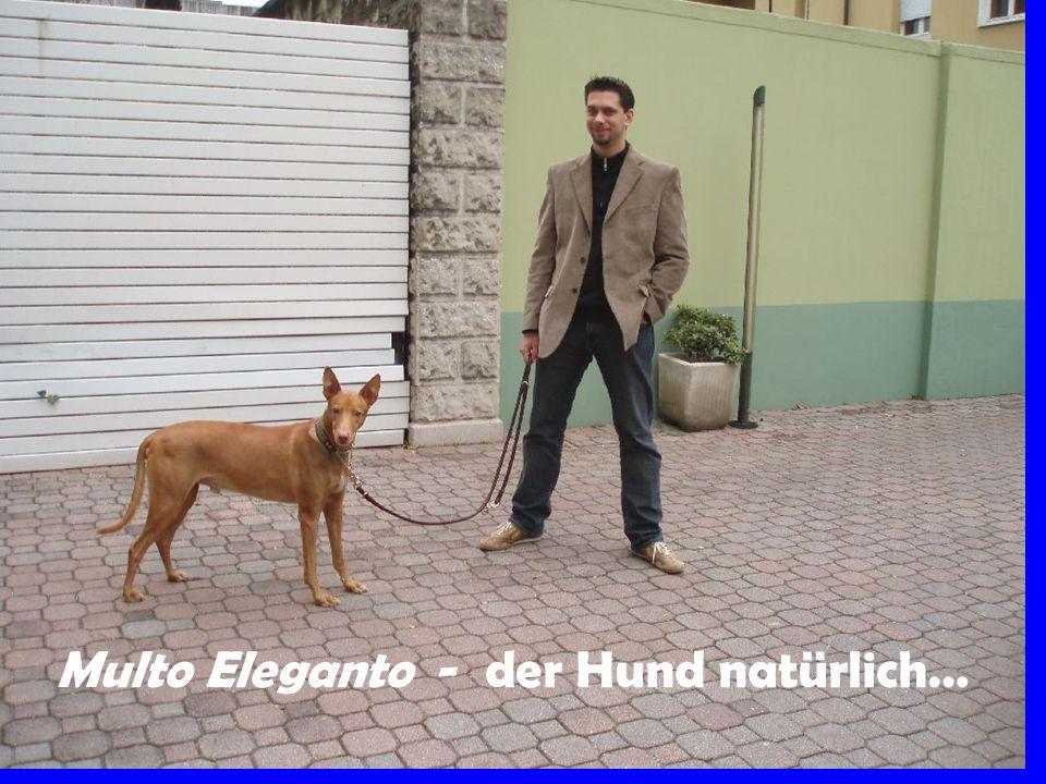 Multo Eleganto - der Hund natürlich…
