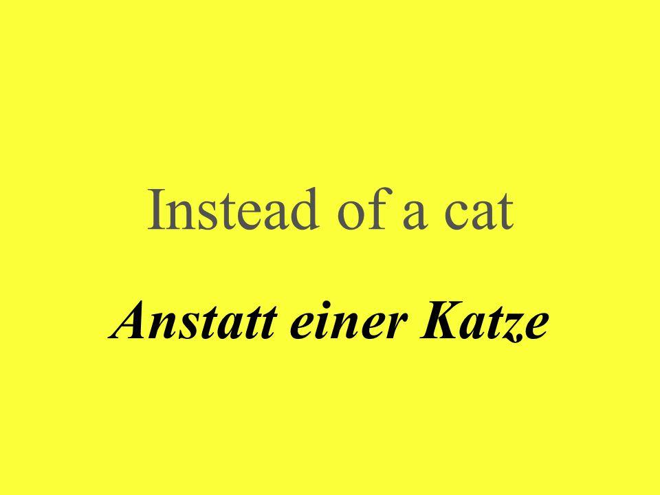 Instead of a cat Anstatt einer Katze