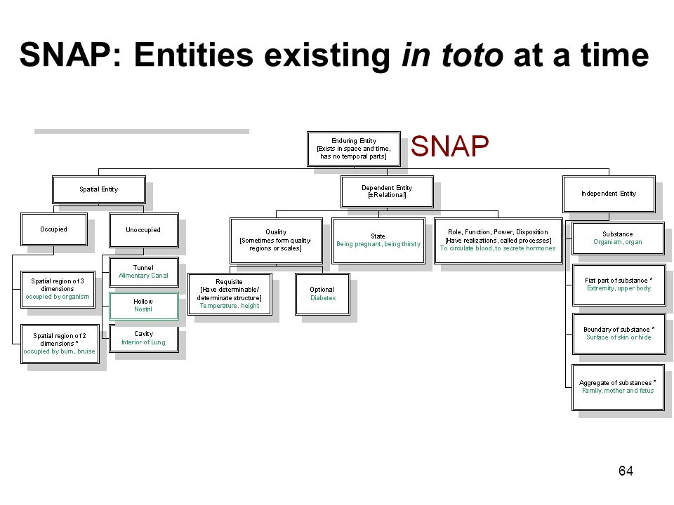64 SNAP: Entities existing in toto at a time