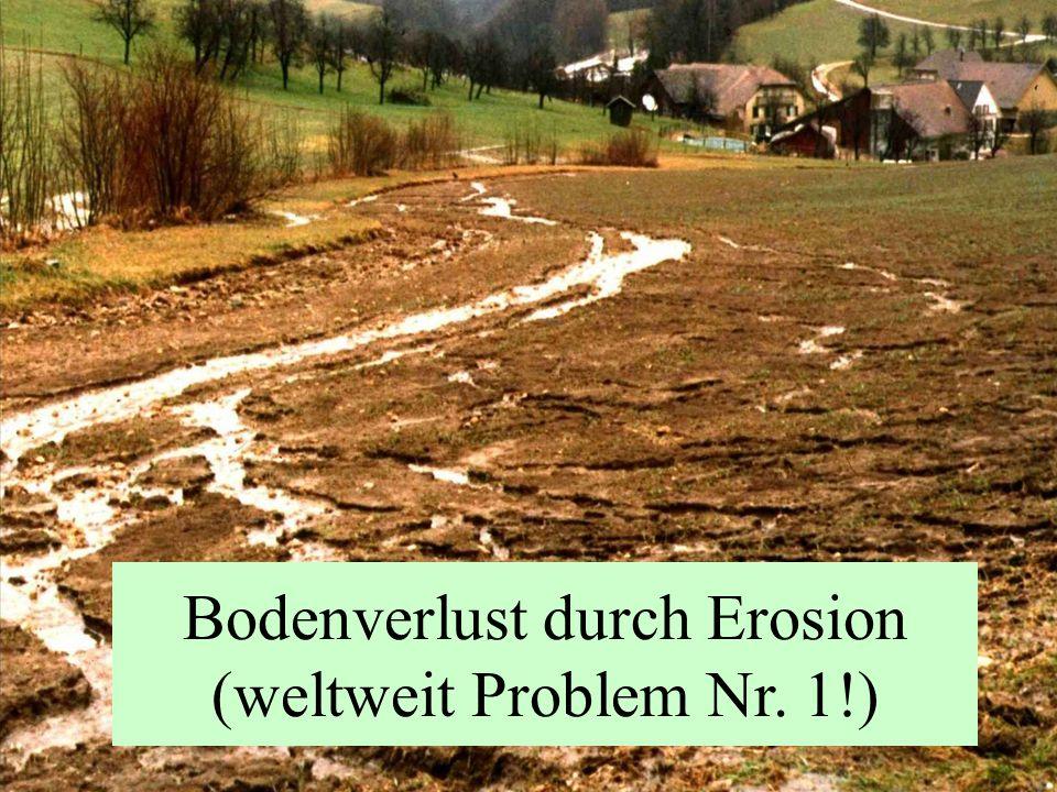 Bodenverlust durch Erosion (weltweit Problem Nr. 1!)
