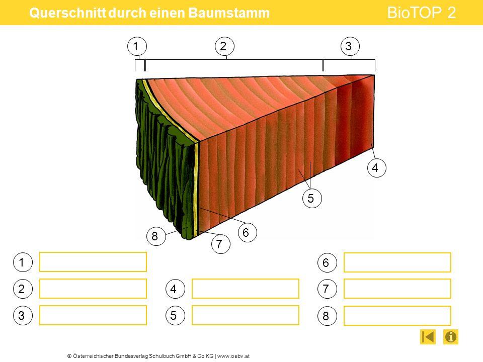 © Österreichischer Bundesverlag Schulbuch GmbH & Co KG | www.oebv.at BioTOP 2 Querschnitt durch einen Baumstamm 321 1 2 3 4 5 6 4 5 6 7 8 7 8