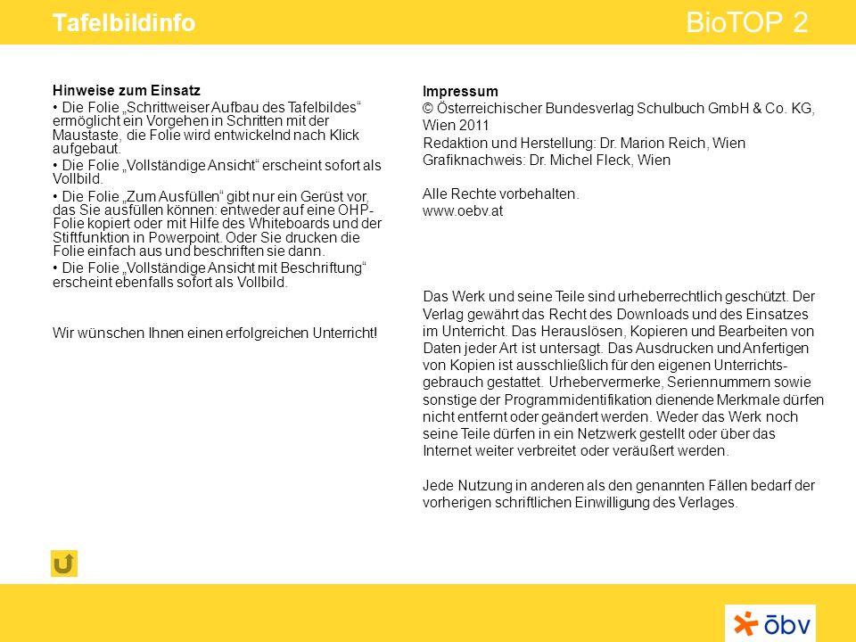 © Österreichischer Bundesverlag Schulbuch GmbH & Co KG   www.oebv.at BioTOP 2 Tafelbildinfo Hinweise zum Einsatz Die Folie Schrittweiser Aufbau des Ta