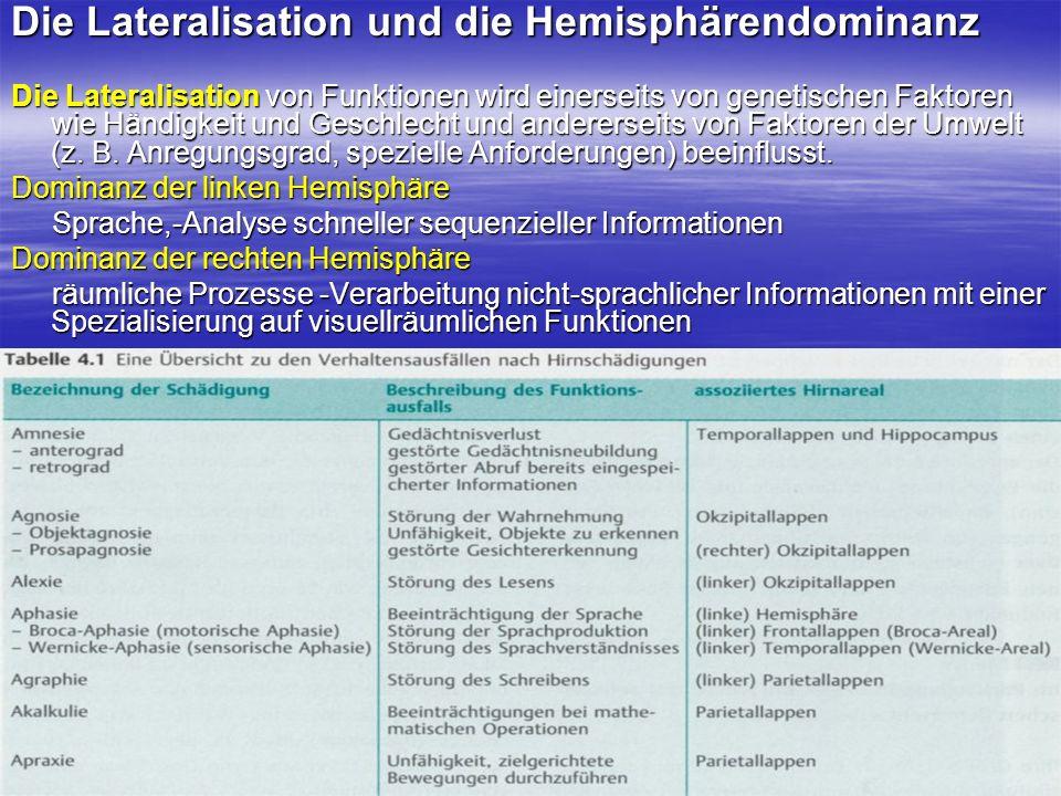 Die Lateralisation und die Hemisphärendominanz Die Lateralisation von Funktionen wird einerseits von genetischen Faktoren wie Händigkeit und Geschlech