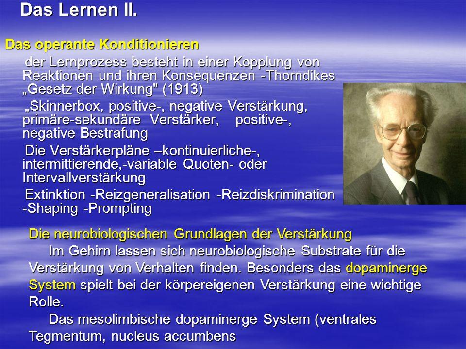 Das Lernen II. Das Lernen II. Das operante Konditionieren der Lernprozess besteht in einer Kopplung von Reaktionen und ihren Konsequenzen -Thorndikes
