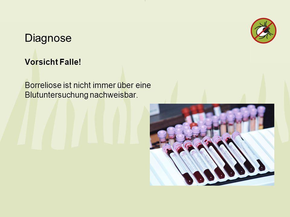 Diagnose Vorsicht Falle! Borreliose ist nicht immer über eine Blutuntersuchung nachweisbar.