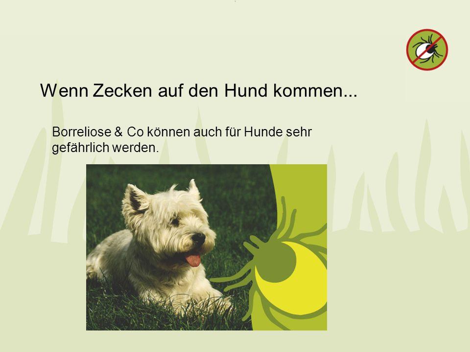 Wenn Zecken auf den Hund kommen... Borreliose & Co können auch für Hunde sehr gefährlich werden.