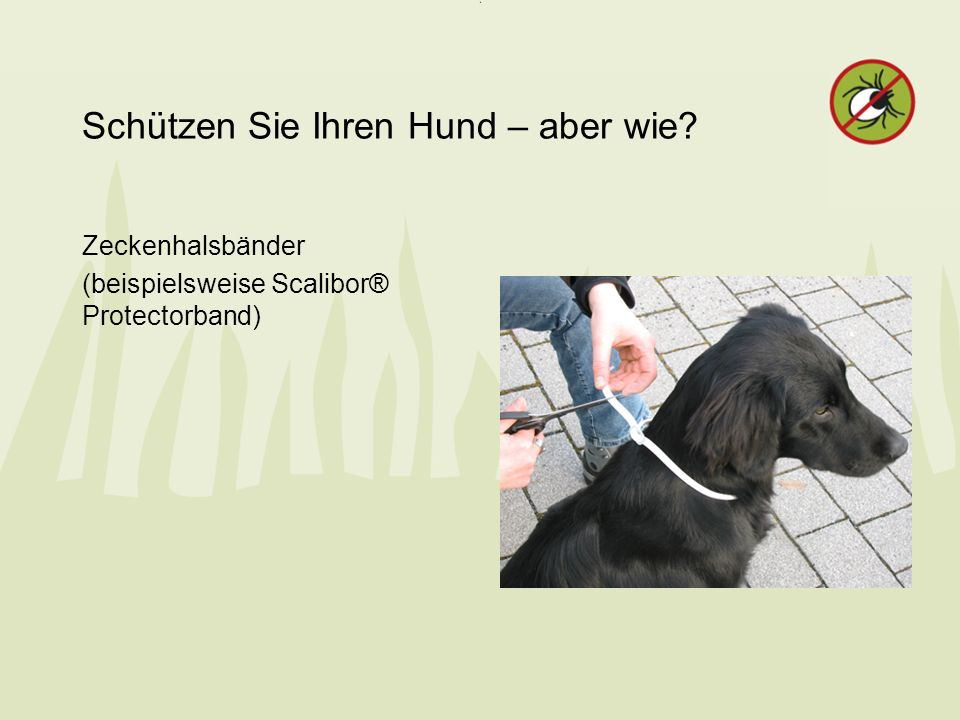 Schützen Sie Ihren Hund – aber wie? Zeckenhalsbänder (beispielsweise Scalibor® Protectorband)