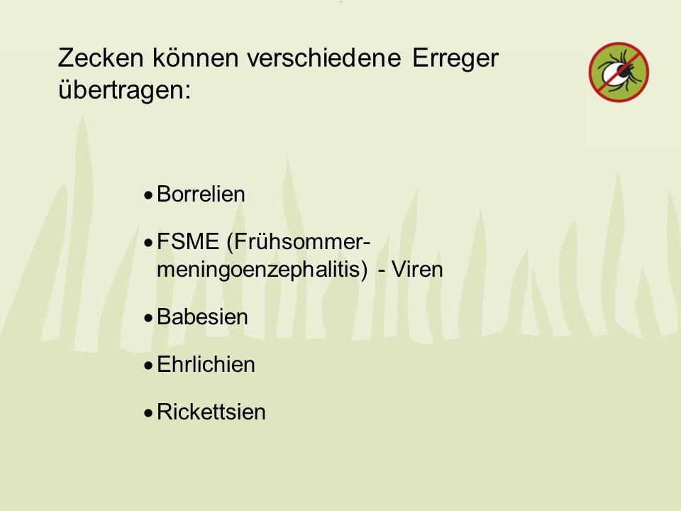 Zecken können verschiedene Erreger übertragen: Borrelien FSME (Frühsommer- meningoenzephalitis) - Viren Babesien Ehrlichien Rickettsien