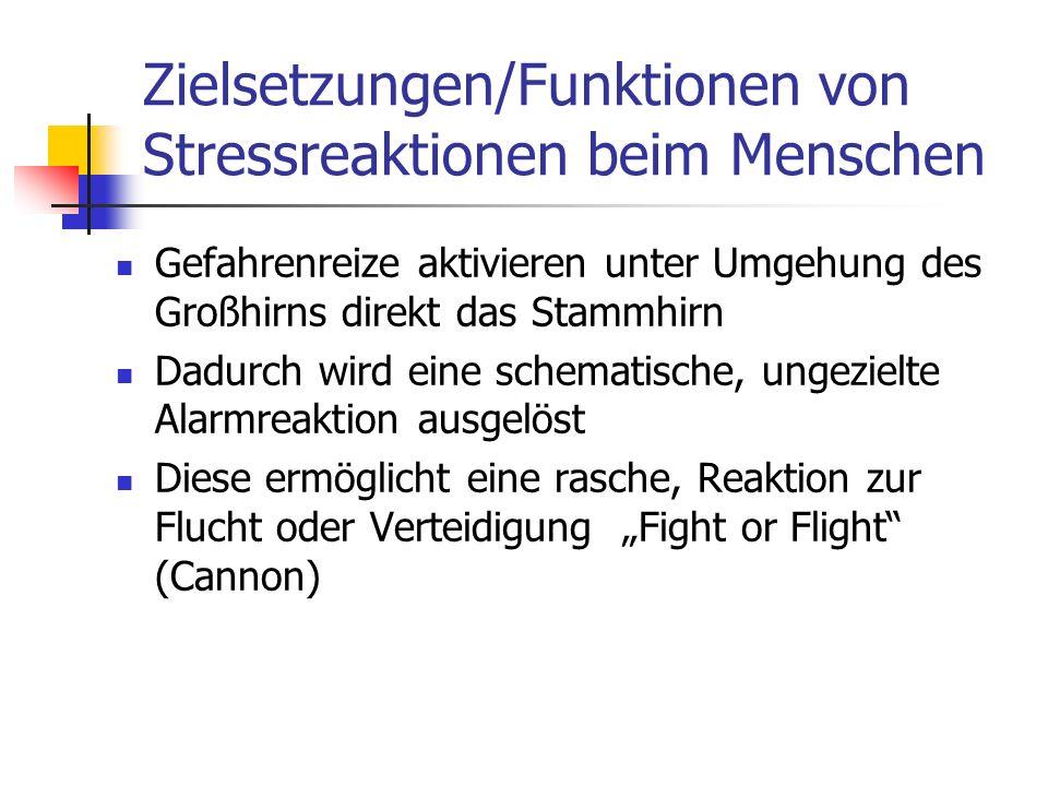 Zielsetzungen/Funktionen von Stressreaktionen beim Menschen Gefahrenreize aktivieren unter Umgehung des Großhirns direkt das Stammhirn Dadurch wird ei