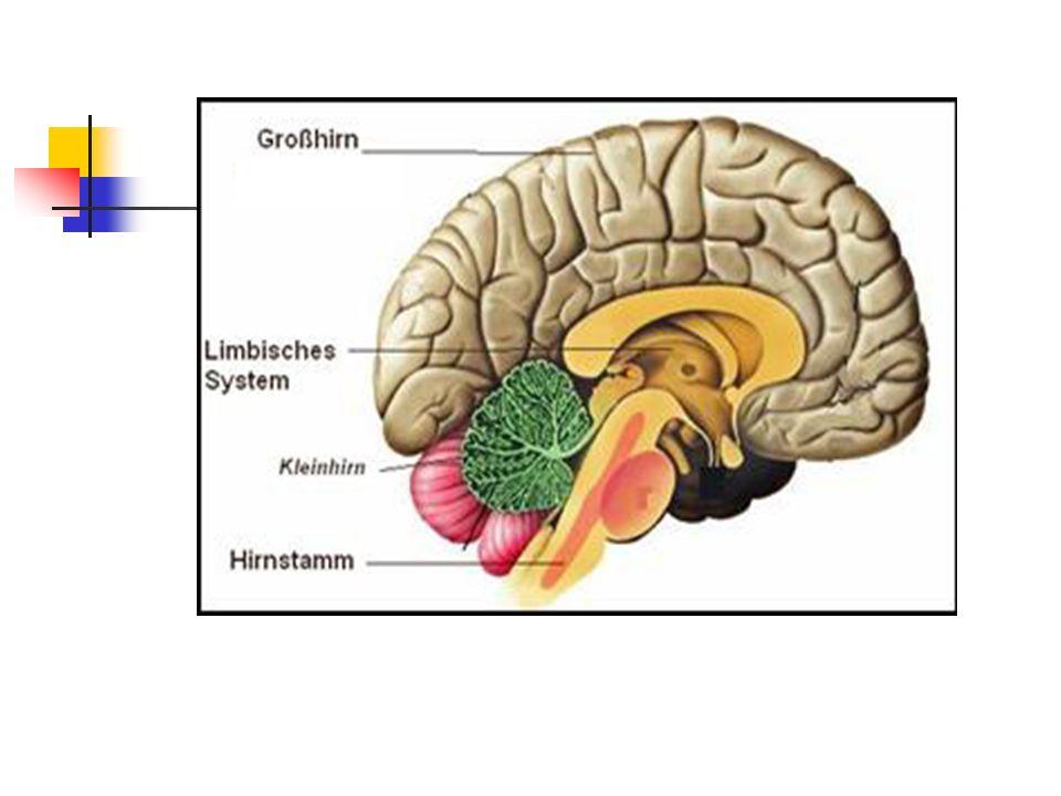 Die Hormonsteuerung der akuten Stressreaktion Bei Gefahrenreiz Dämpfung des zu langsam agierenden Großhirns durch Serotonin Aktivierung des Stammhirns durch Noradrenalin Aktivierung der Hypophyse (ACTH-Ausschüttung) Die dadurch aktivierte Nebennierenrinde produziert verstärkt Cortisol Ziel der Aktivierung : Alarm und Schutz