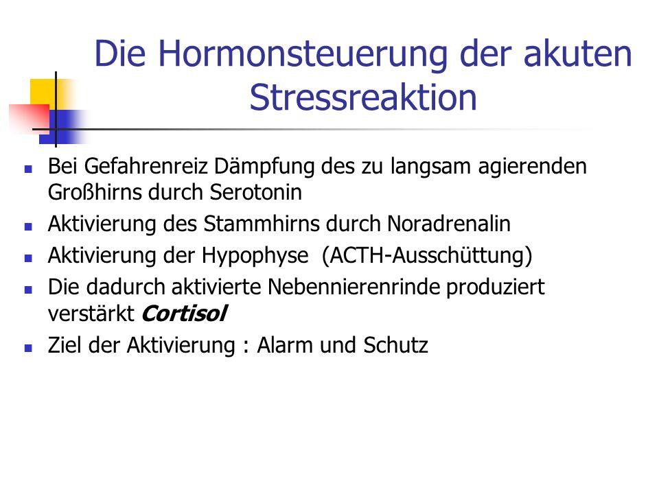 Die Hormonsteuerung der akuten Stressreaktion Bei Gefahrenreiz Dämpfung des zu langsam agierenden Großhirns durch Serotonin Aktivierung des Stammhirns