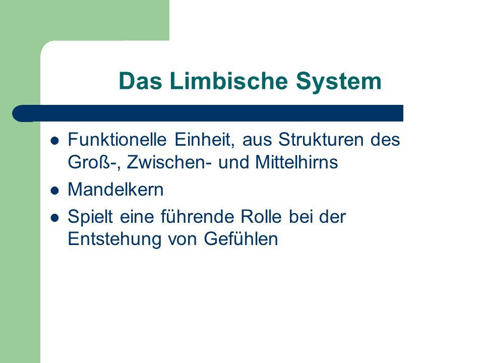 Das Limbische System Funktionelle Einheit, aus Strukturen des Groß-, Zwischen- und Mittelhirns Mandelkern Spielt eine führende Rolle bei der Entstehun