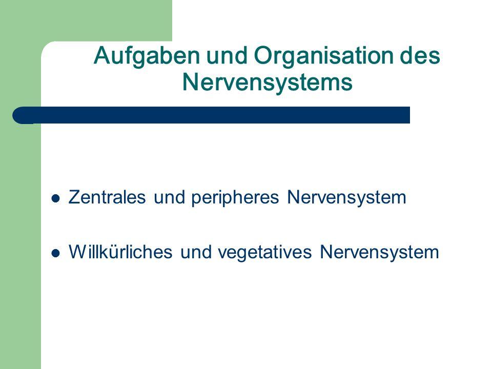 Aufgaben und Organisation des Nervensystems Zentrales und peripheres Nervensystem Willkürliches und vegetatives Nervensystem