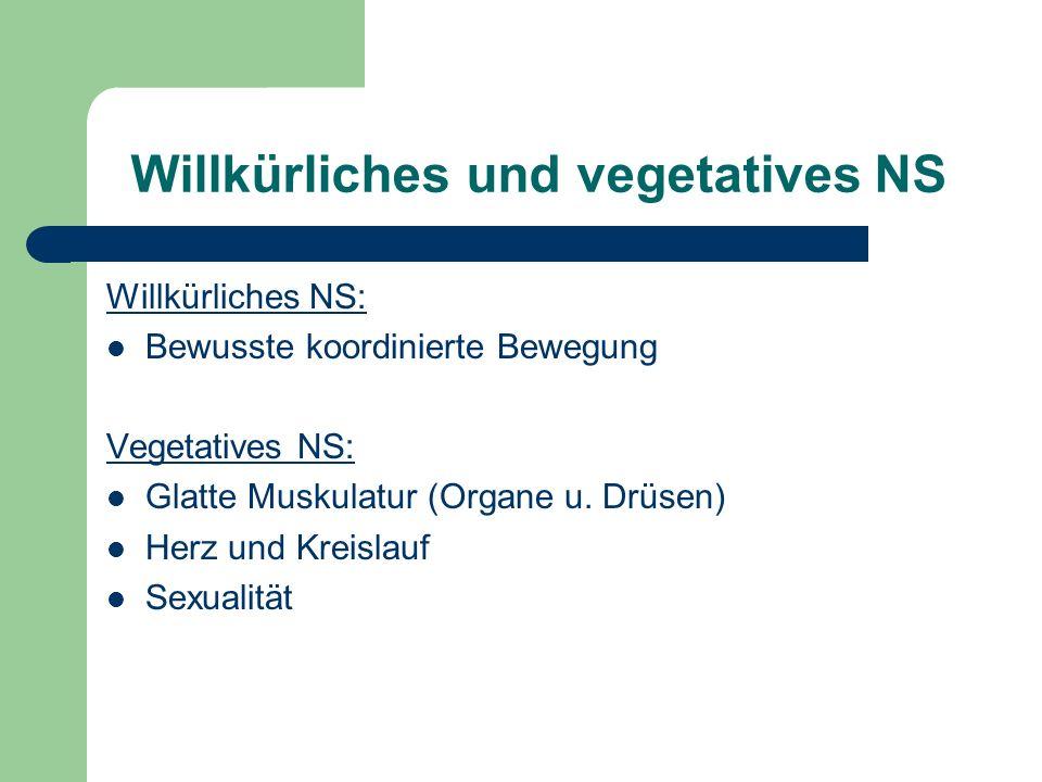 Willkürliches und vegetatives NS Willkürliches NS: Bewusste koordinierte Bewegung Vegetatives NS: Glatte Muskulatur (Organe u. Drüsen) Herz und Kreisl