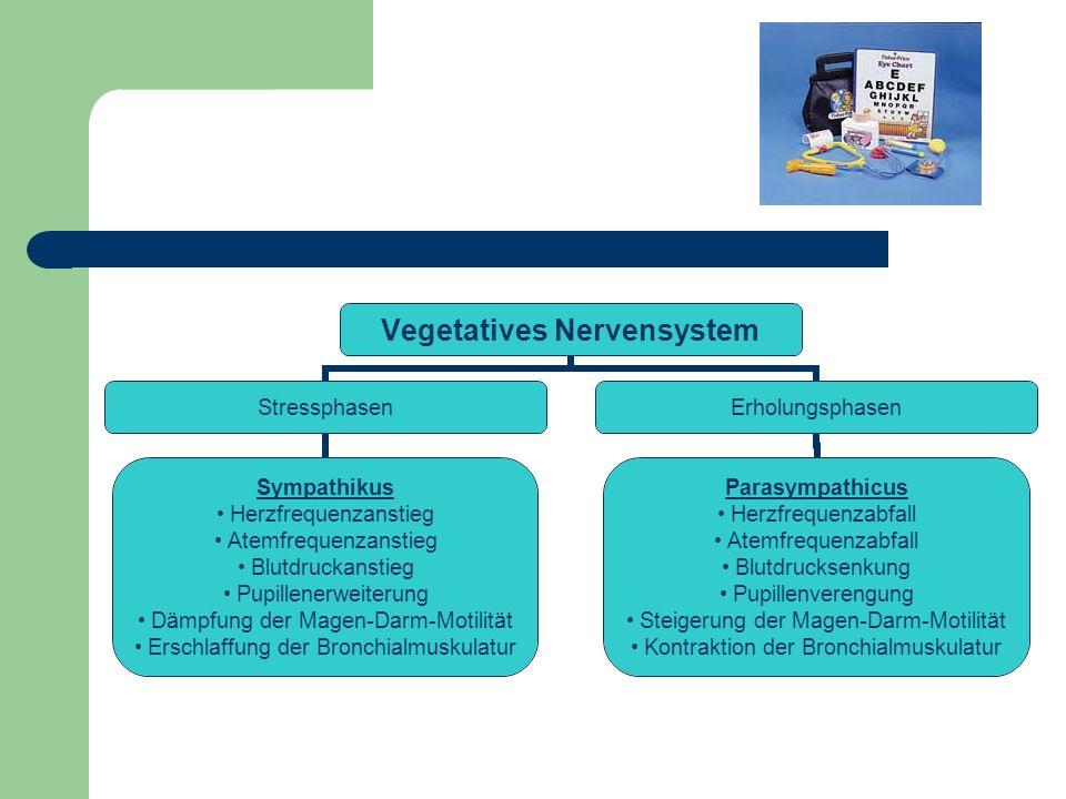 Vegetatives Nervensystem Stressphasen Sympathikus Herzfrequenzanstieg Atemfrequenzanstieg Blutdruckanstieg Pupillenerweiterung Dämpfung der Magen-Darm