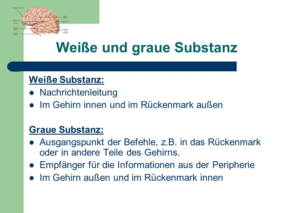 Weiße und graue Substanz Weiße Substanz: Nachrichtenleitung Im Gehirn innen und im Rückenmark außen Graue Substanz: Ausgangspunkt der Befehle, z.B. in