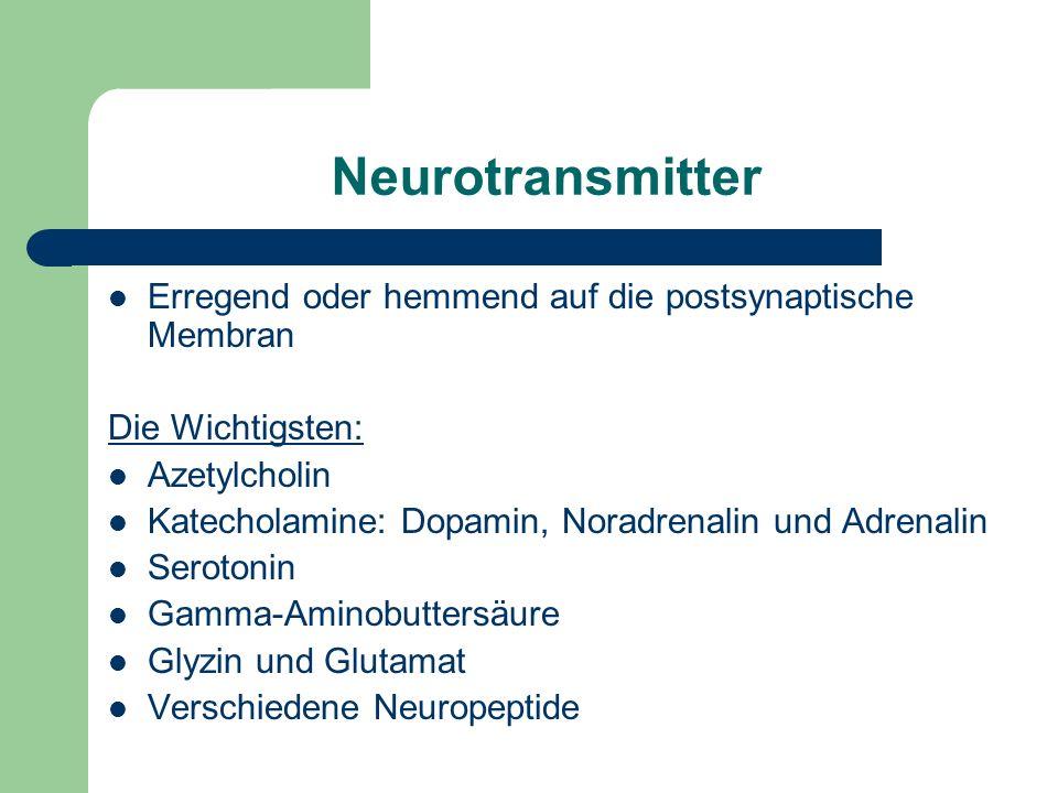 Neurotransmitter Erregend oder hemmend auf die postsynaptische Membran Die Wichtigsten: Azetylcholin Katecholamine: Dopamin, Noradrenalin und Adrenali