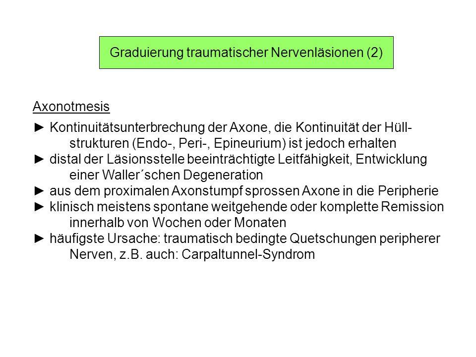 Graduierung traumatischer Nervenläsionen (2) Axonotmesis Kontinuitätsunterbrechung der Axone, die Kontinuität der Hüll- strukturen (Endo-, Peri-, Epin