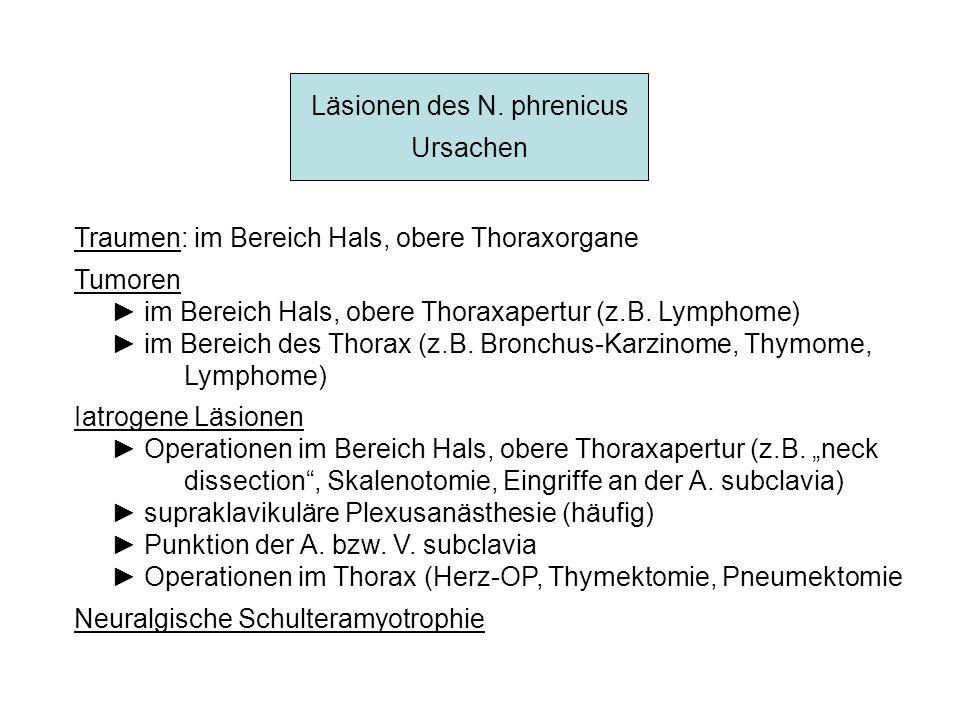 Läsionen des N. phrenicus Ursachen Traumen: im Bereich Hals, obere Thoraxorgane Tumoren im Bereich Hals, obere Thoraxapertur (z.B. Lymphome) im Bereic