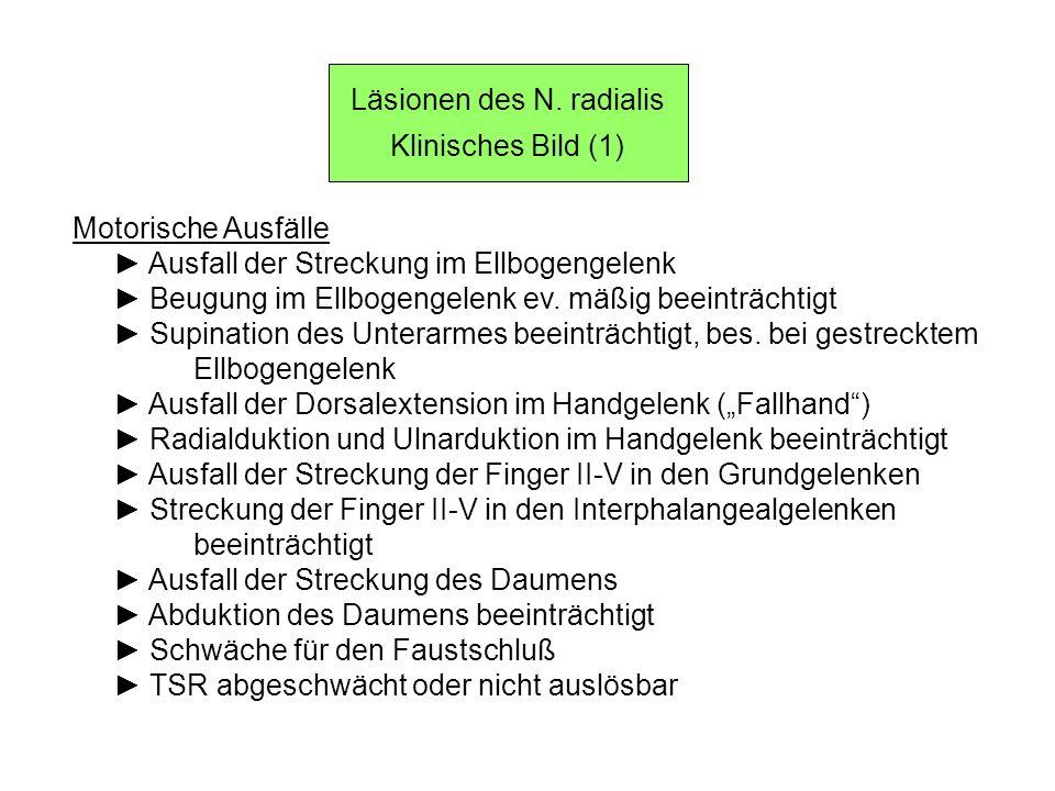 Läsionen des N. radialis Klinisches Bild (1) Motorische Ausfälle Ausfall der Streckung im Ellbogengelenk Beugung im Ellbogengelenk ev. mäßig beeinträc