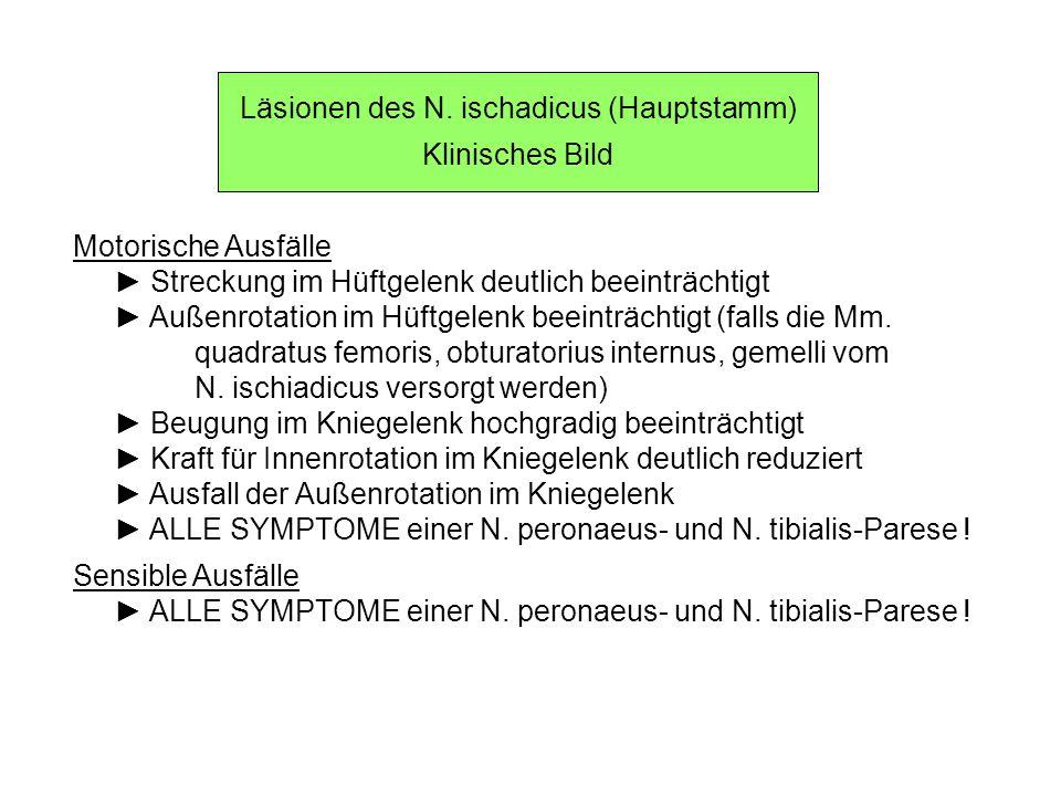 Läsionen des N. ischadicus (Hauptstamm) Klinisches Bild Motorische Ausfälle Streckung im Hüftgelenk deutlich beeinträchtigt Außenrotation im Hüftgelen