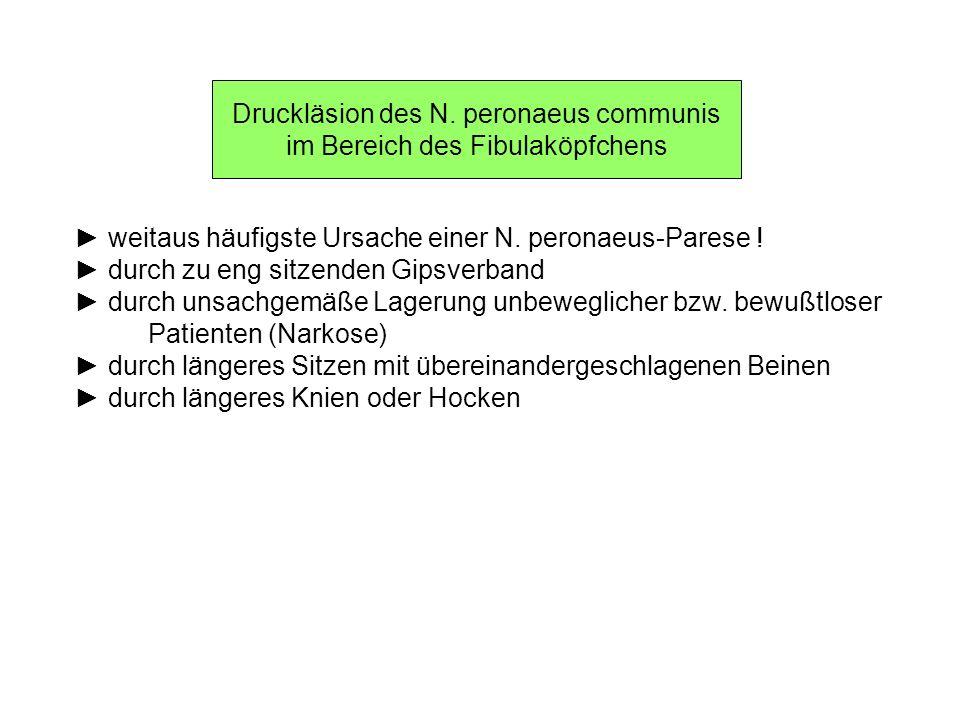 Druckläsion des N. peronaeus communis im Bereich des Fibulaköpfchens weitaus häufigste Ursache einer N. peronaeus-Parese ! durch zu eng sitzenden Gips