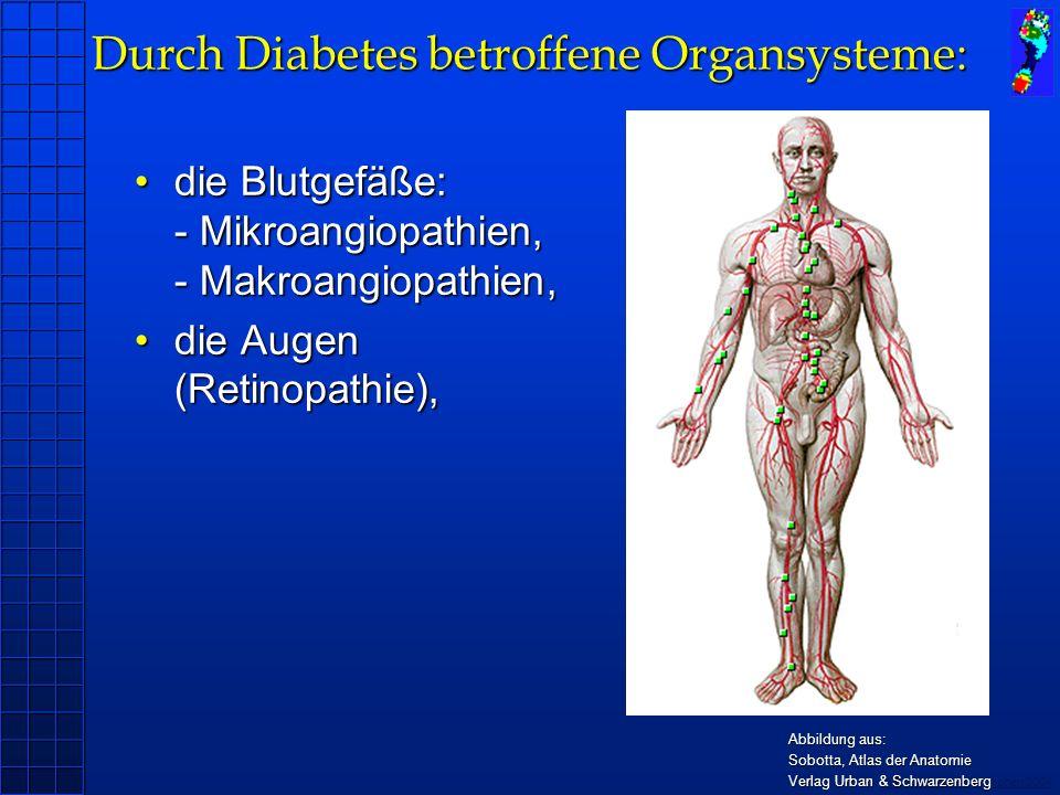 Copyright novel München 2004 Durch Diabetes betroffene Organsysteme: die Blutgefäße: - Mikroangiopathien, - Makroangiopathien,die Blutgefäße: - Mikroangiopathien, - Makroangiopathien, die Augen (Retinopathie),die Augen (Retinopathie), die Nieren (Nephropathie),die Nieren (Nephropathie), Abbildung aus: Sobotta, Atlas der Anatomie Verlag Urban & Schwarzenberg