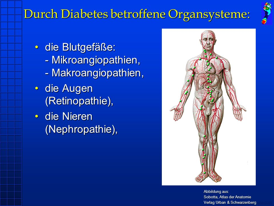 Copyright novel München 2004 Durch Diabetes betroffene Organsysteme: die Blutgefäße: - Mikroangiopathien, - Makroangiopathien,die Blutgefäße: - Mikroangiopathien, - Makroangiopathien, die Augen (Retinopathie),die Augen (Retinopathie), die Nieren (Nephropathie),die Nieren (Nephropathie), das Nervensystem (Neuropathien)das Nervensystem (Neuropathien) Abbildung aus: Sobotta, Atlas der Anatomie Verlag Urban & Schwarzenberg