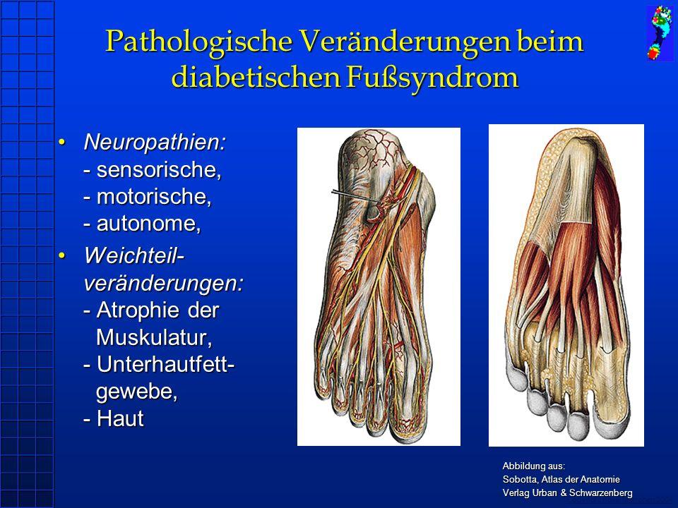 Copyright novel München 2004 Pathologische Veränderungen beim diabetischen Fußsyndrom Neuropathien: - sensorische, - motorische, - autonome,Neuropathi