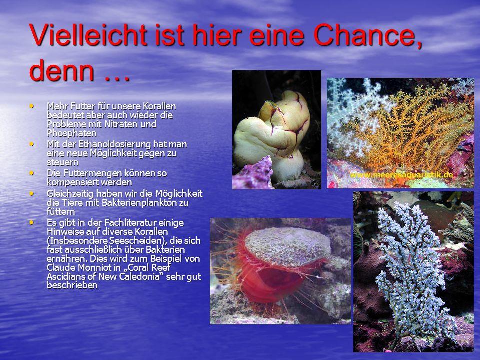 Vielleicht ist hier eine Chance, denn … Mehr Futter für unsere Korallen bedeutet aber auch wieder die Probleme mit Nitraten und Phosphaten Mehr Futter
