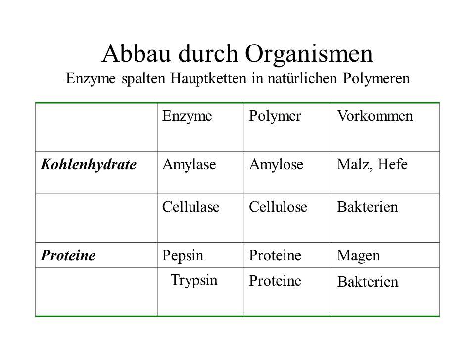 Abbau durch Organismen Enzyme spalten Hauptketten in natürlichen Polymeren EnzymePolymerVorkommen KohlenhydrateAmylaseAmyloseMalz, Hefe CellulaseCellu
