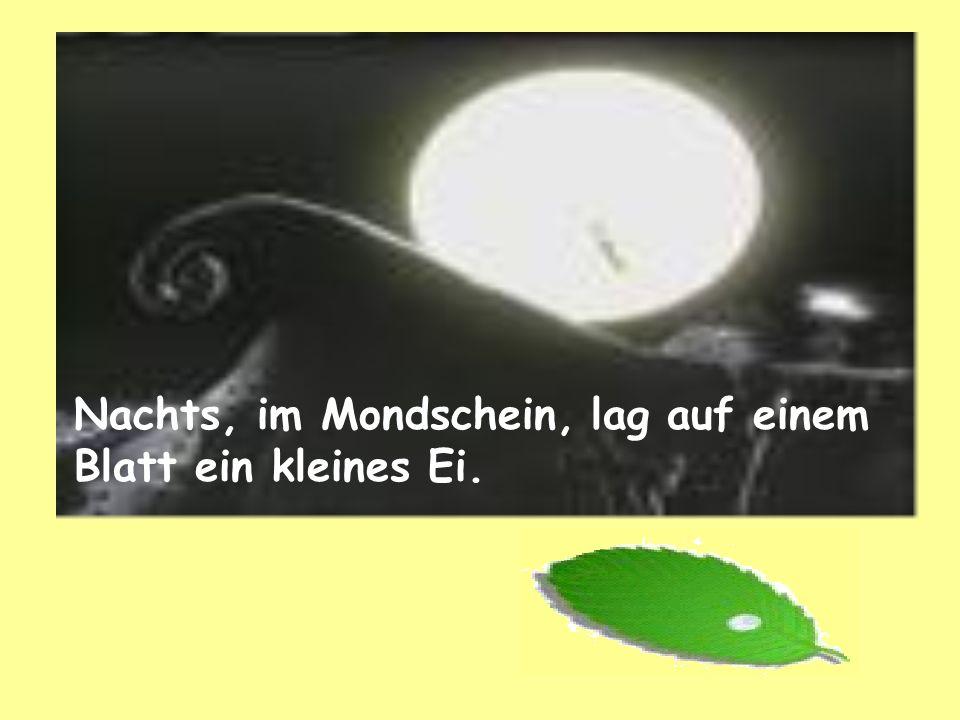 Nachts, im Mondschein, lag auf einem Blatt ein kleines Ei.