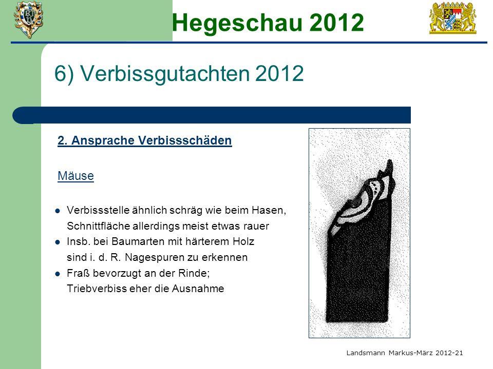 Hegeschau 2012 6) Verbissgutachten 2012 2. Ansprache Verbissschäden Mäuse Verbissstelle ähnlich schräg wie beim Hasen, Schnittfläche allerdings meist