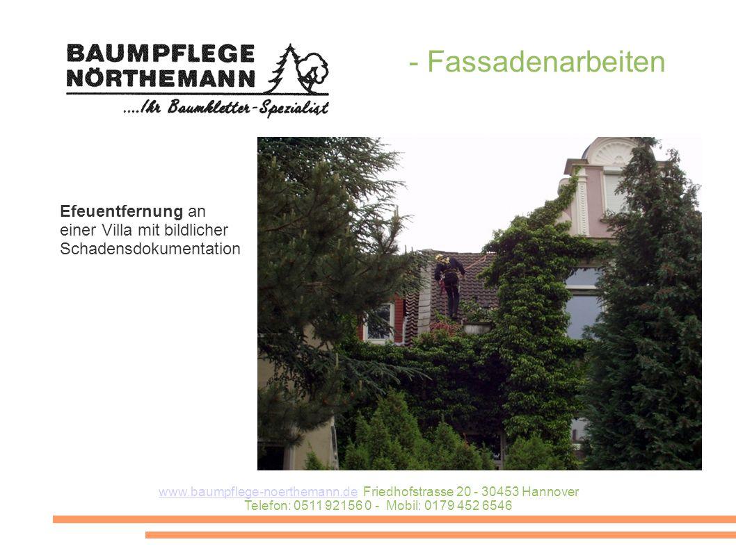 Efeuentfernung an einer Villa mit bildlicher Schadensdokumentation - Fassadenarbeiten www.baumpflege-noerthemann.dewww.baumpflege-noerthemann.de Fried