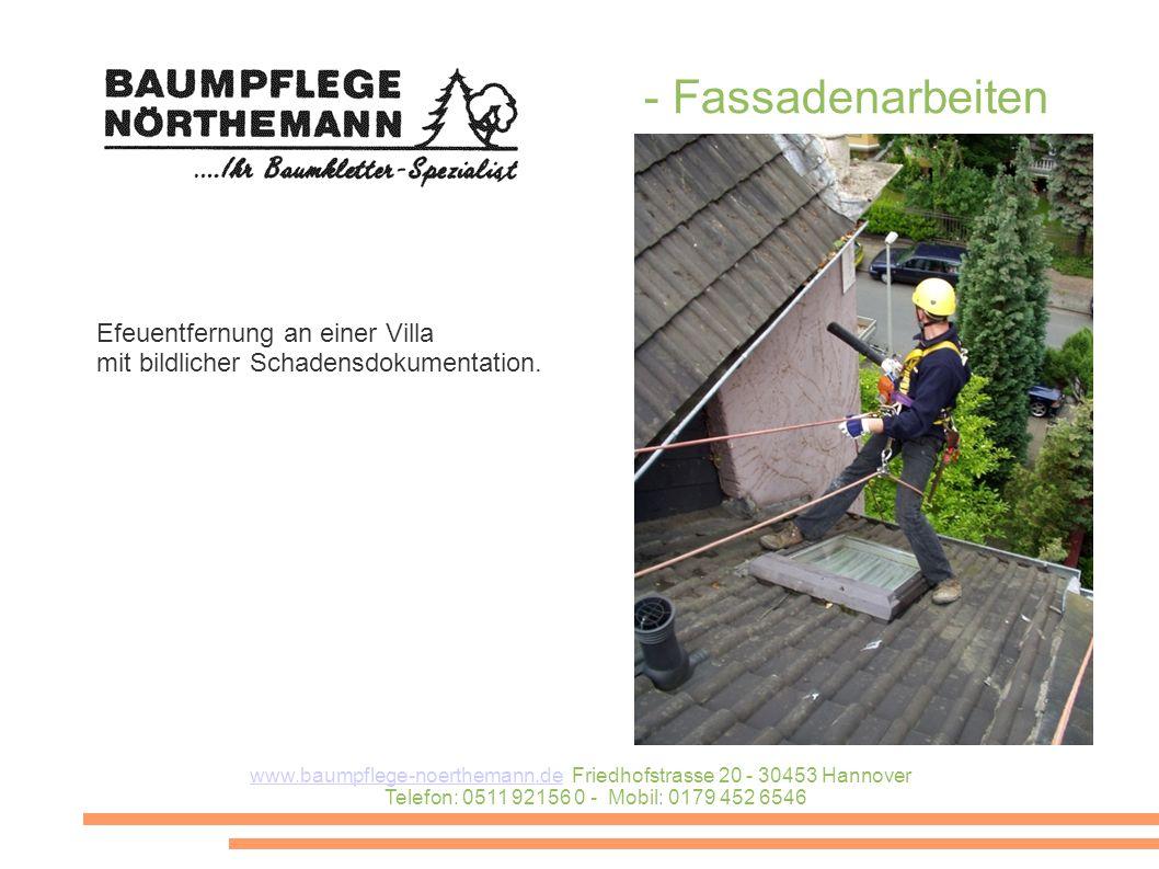 Efeuentfernung an einer Villa mit bildlicher Schadensdokumentation. - Fassadenarbeiten www.baumpflege-noerthemann.dewww.baumpflege-noerthemann.de Frie
