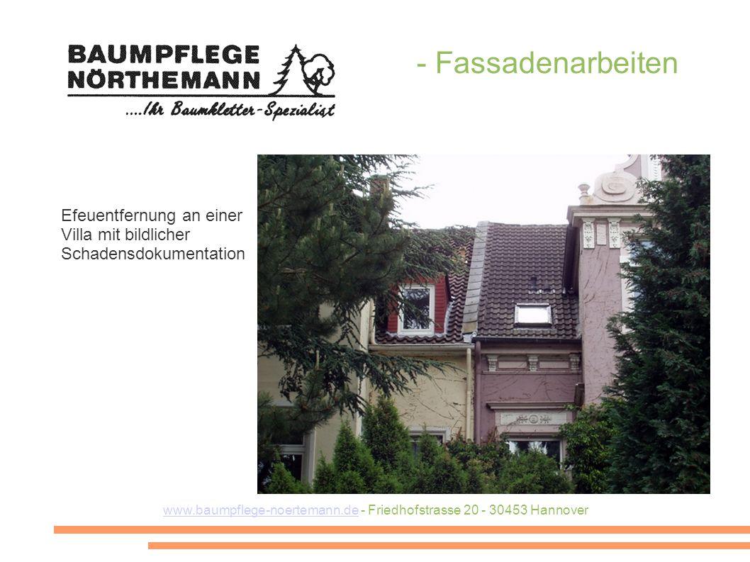 www.baumpflege-noertemann.dewww.baumpflege-noertemann.de - Friedhofstrasse 20 - 30453 Hannover - Fassadenarbeiten Efeuentfernung an einer Villa mit bildlicher Schadensdokumentation