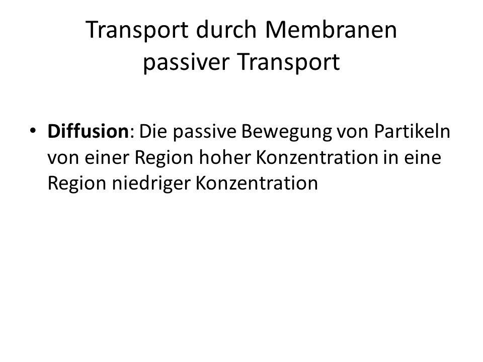 Transport durch Membranen passiver Transport Diffusion: Die passive Bewegung von Partikeln von einer Region hoher Konzentration in eine Region niedrig