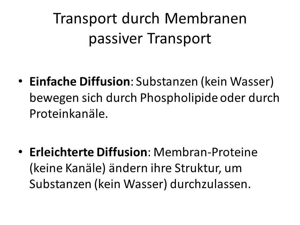 Transport durch Membranen passiver Transport Einfache Diffusion: Substanzen (kein Wasser) bewegen sich durch Phospholipide oder durch Proteinkanäle. E