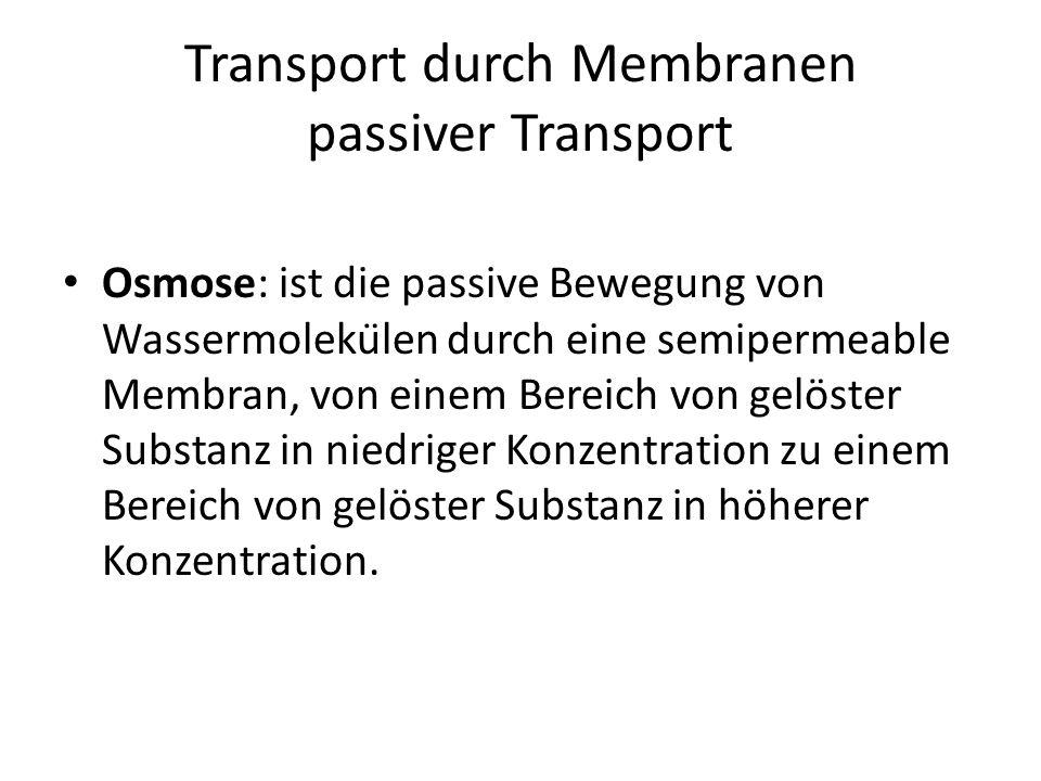 Transport durch Membranen passiver Transport Osmose: ist die passive Bewegung von Wassermolekülen durch eine semipermeable Membran, von einem Bereich