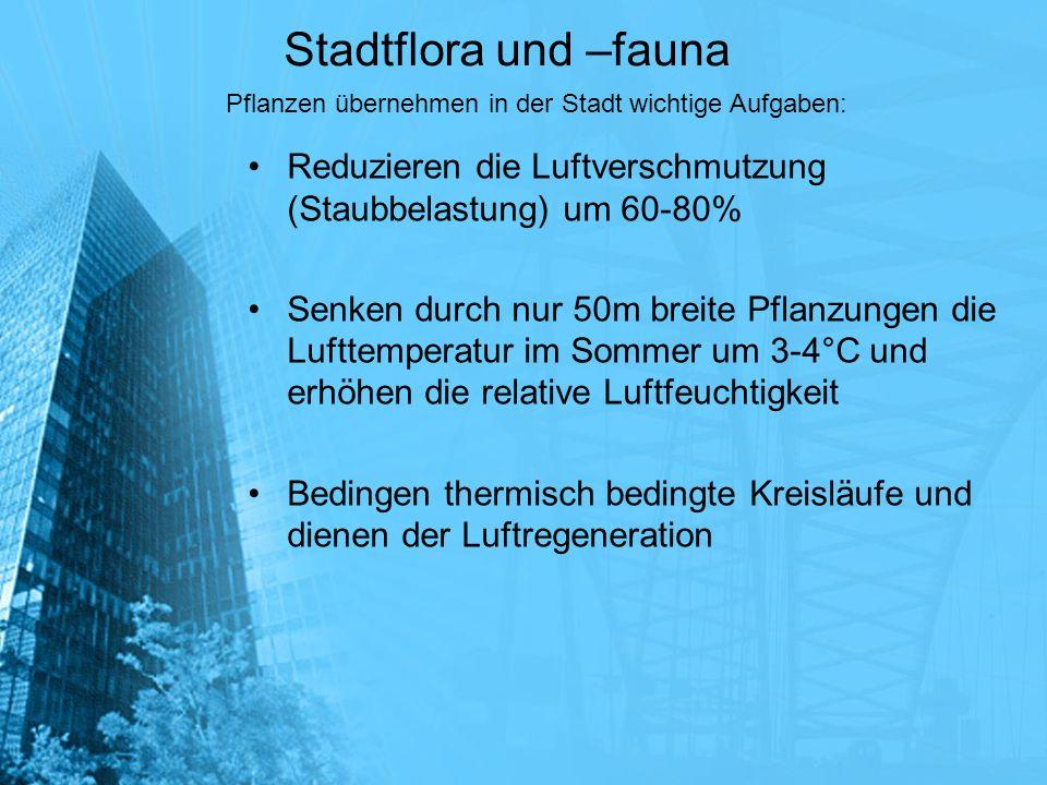 Stadtflora und –fauna Reduzieren die Luftverschmutzung (Staubbelastung) um 60-80% Senken durch nur 50m breite Pflanzungen die Lufttemperatur im Sommer