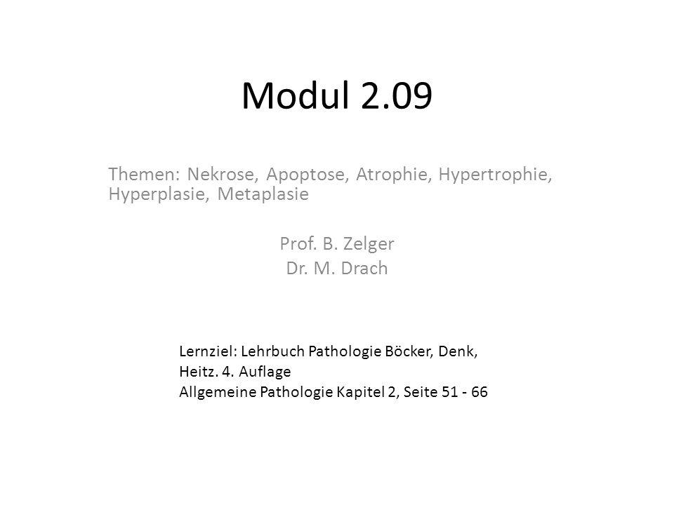 Modul 2.09 Themen: Nekrose, Apoptose, Atrophie, Hypertrophie, Hyperplasie, Metaplasie Prof. B. Zelger Dr. M. Drach Lernziel: Lehrbuch Pathologie Böcke